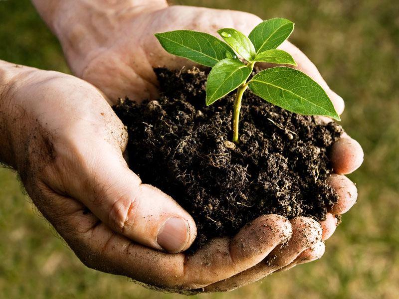 remove organic waste