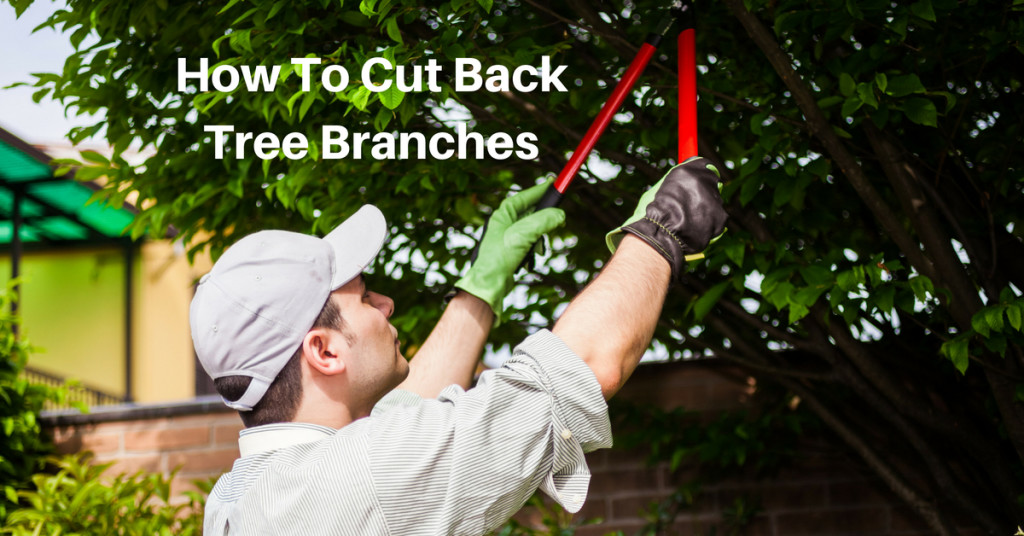 how to cut back tree branches
